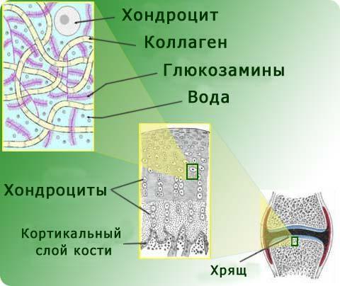 hryashevaya-tkan-sustava