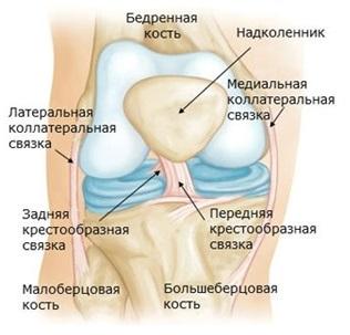 kolenniy_sustav