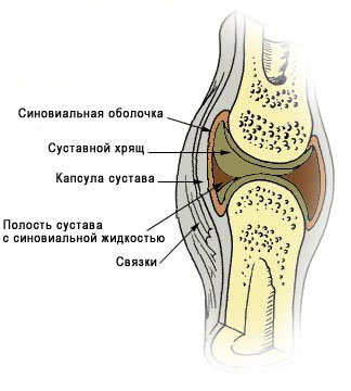 Illu_synovial_joint