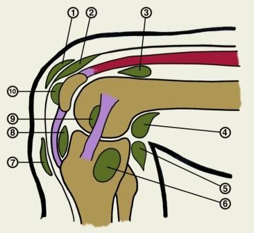 Боли в спине в области поясницы лечение мази