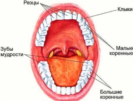teeth-min