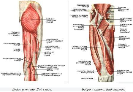 Мышцы и связки коленного сустава болит лимфоузел под коленом