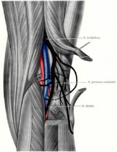 Изображение - Мышцы коленного сустава nervy-kolena-230x300
