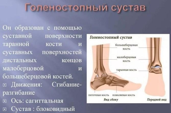 Контузия голеностопного сустава уколы гиалуроновой кислоты в тазобедренный сустав отзывы