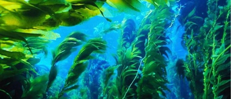 значение водорослей в жизни человека