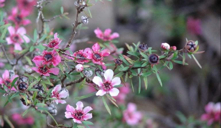 Чем полезен мед: его свойства и польза для человека